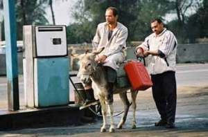donkey-on-peytrol-pump