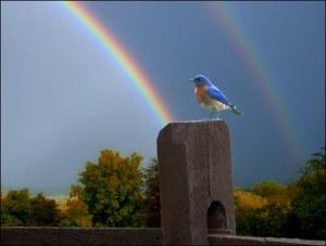 Picture Haiku -Bird and Rainbow