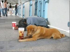 Dog Assistant