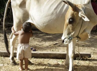 COW & bOY