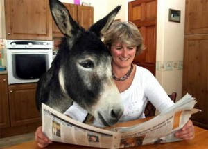 Donkey reading ......