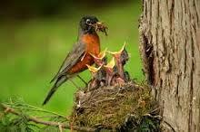 bird,s nest